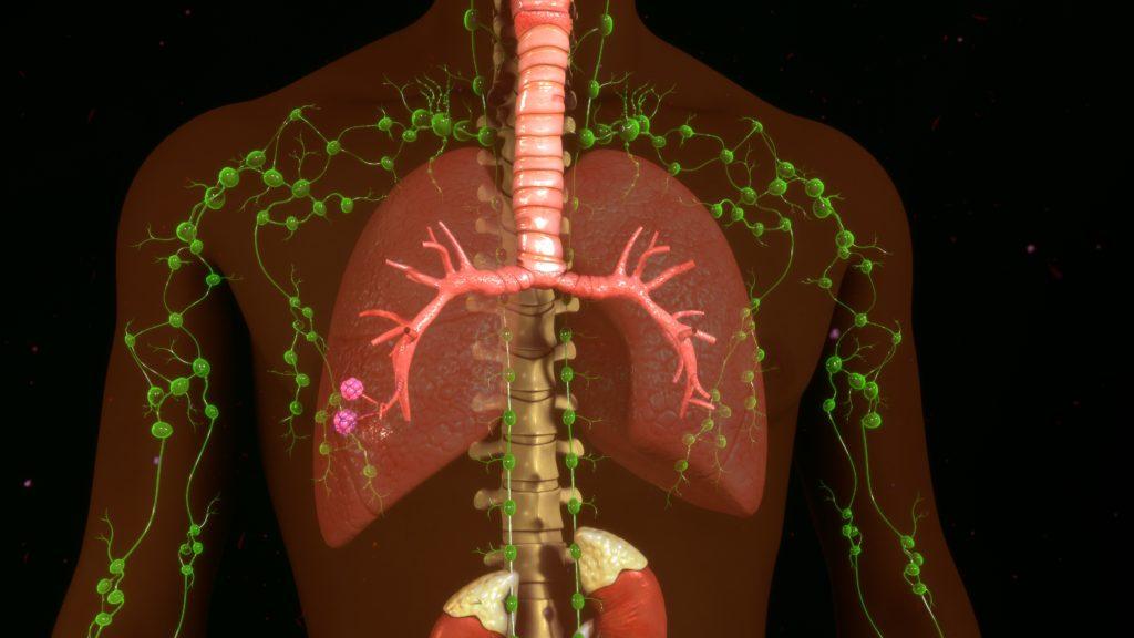 circulatory system and lymph nodes