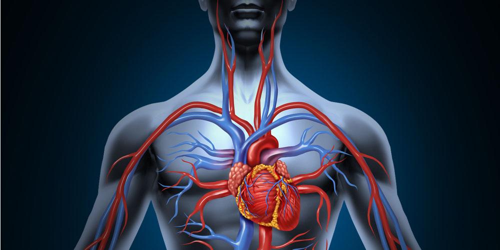 The Amazing Circulatory System